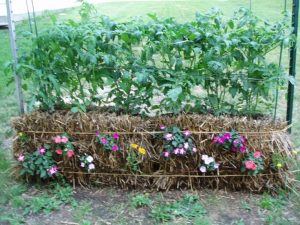Straw Bale Gardening How-To's @ Indian Lake Library